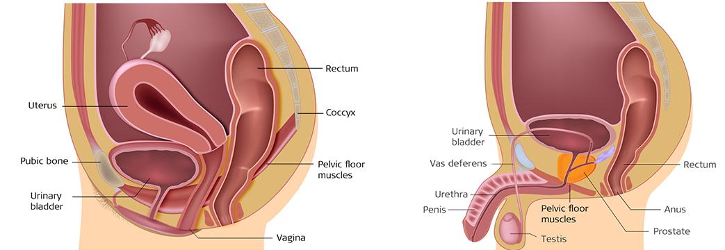Help for weak female vaginal floor