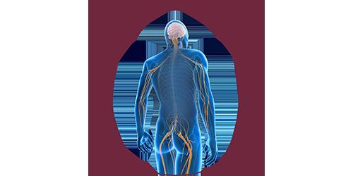FES for neural lesions | STIWELL Neurorehabilitation