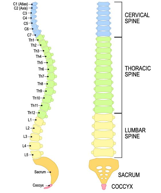 Formen der Querschnittslähmung