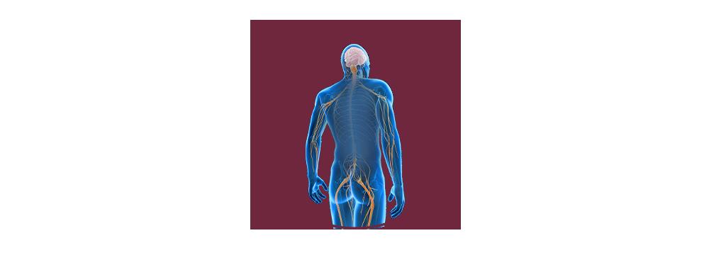 STIWELL   Funktionelle Elektrostimulation (FES) bei Nervenschädigung