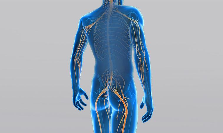 What is a peripheral plegia?